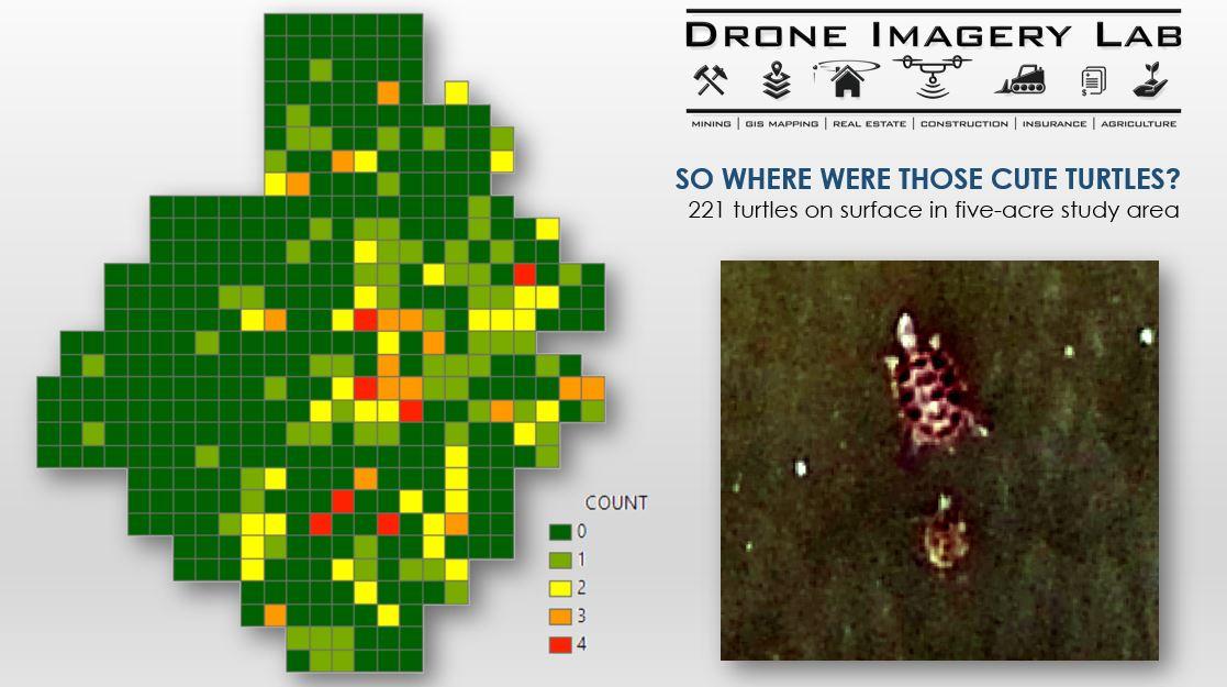Customer Spotlight Chris Kahn 5 - Terrapin Turtles Wildlife Map ArcGIS Pro