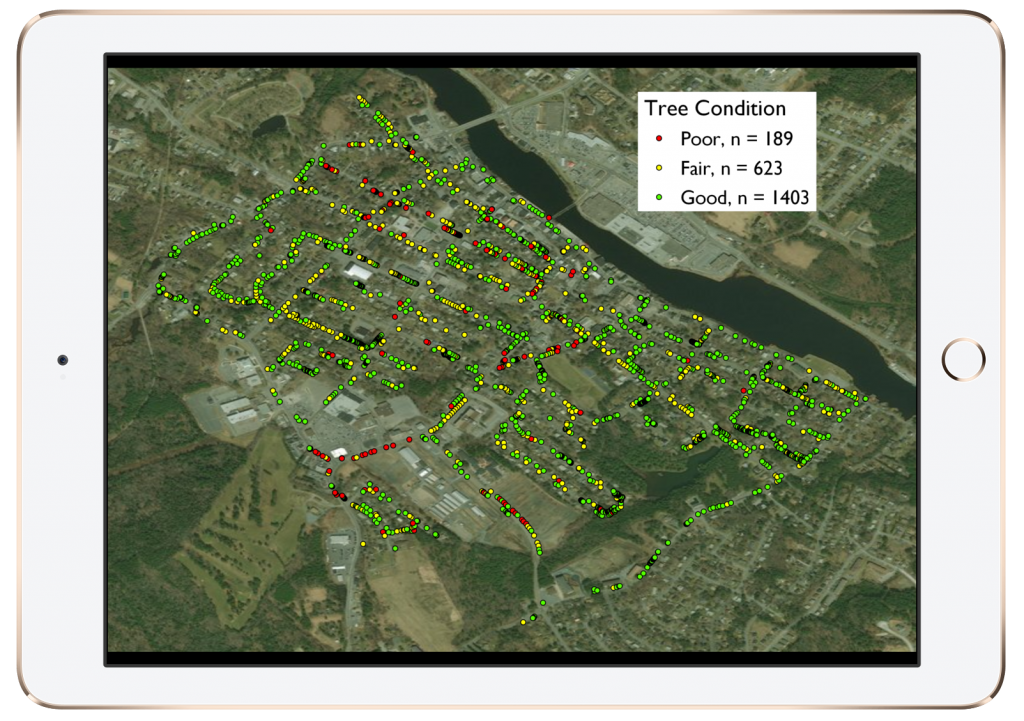 Halifax Students Use Arrow 100 for Urban Forestry Project: Uncovering Health & Risks of One Town's Trees