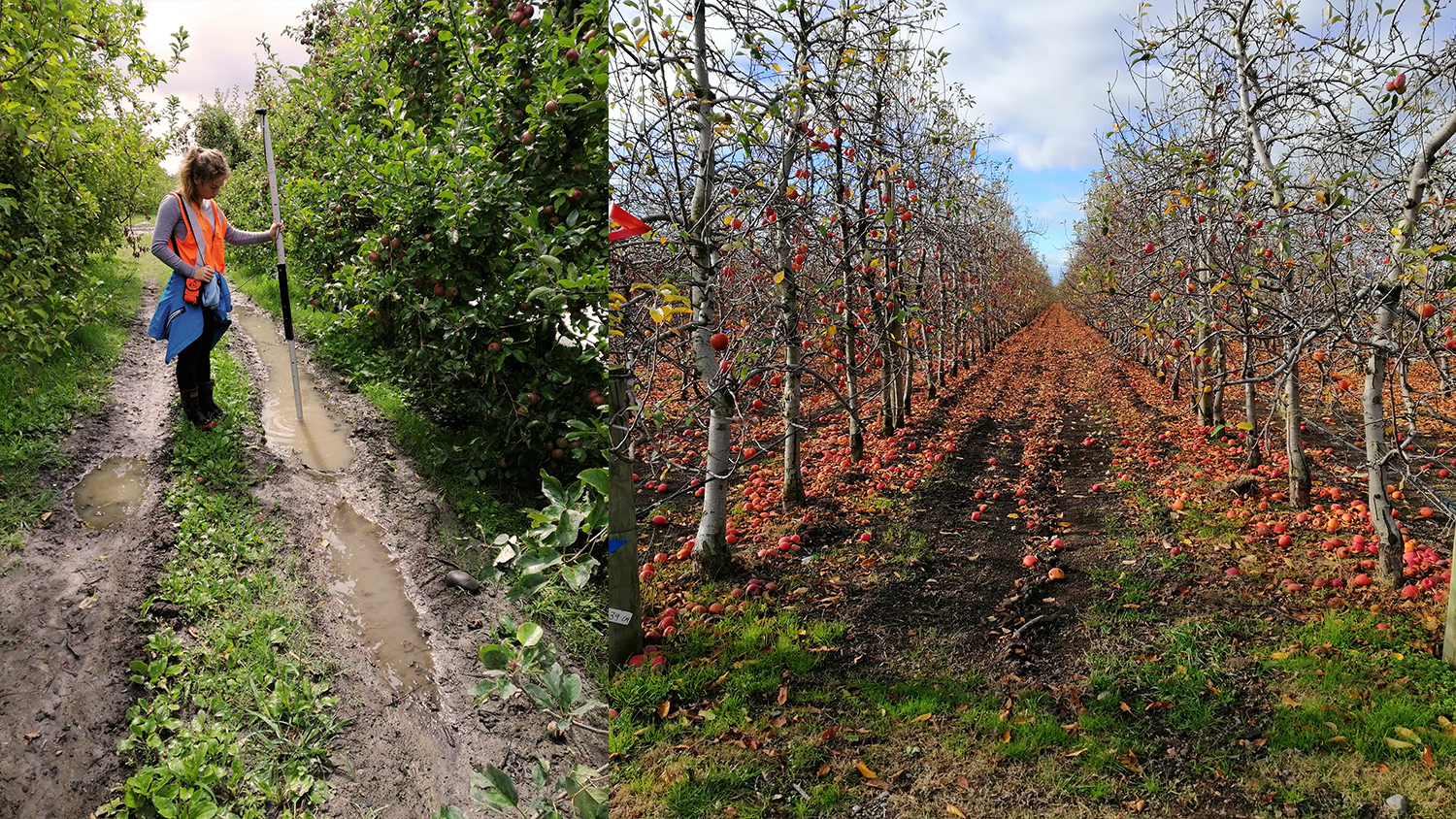 Mapping orchards with Australian-New Zealand SBAS page bloomer associates