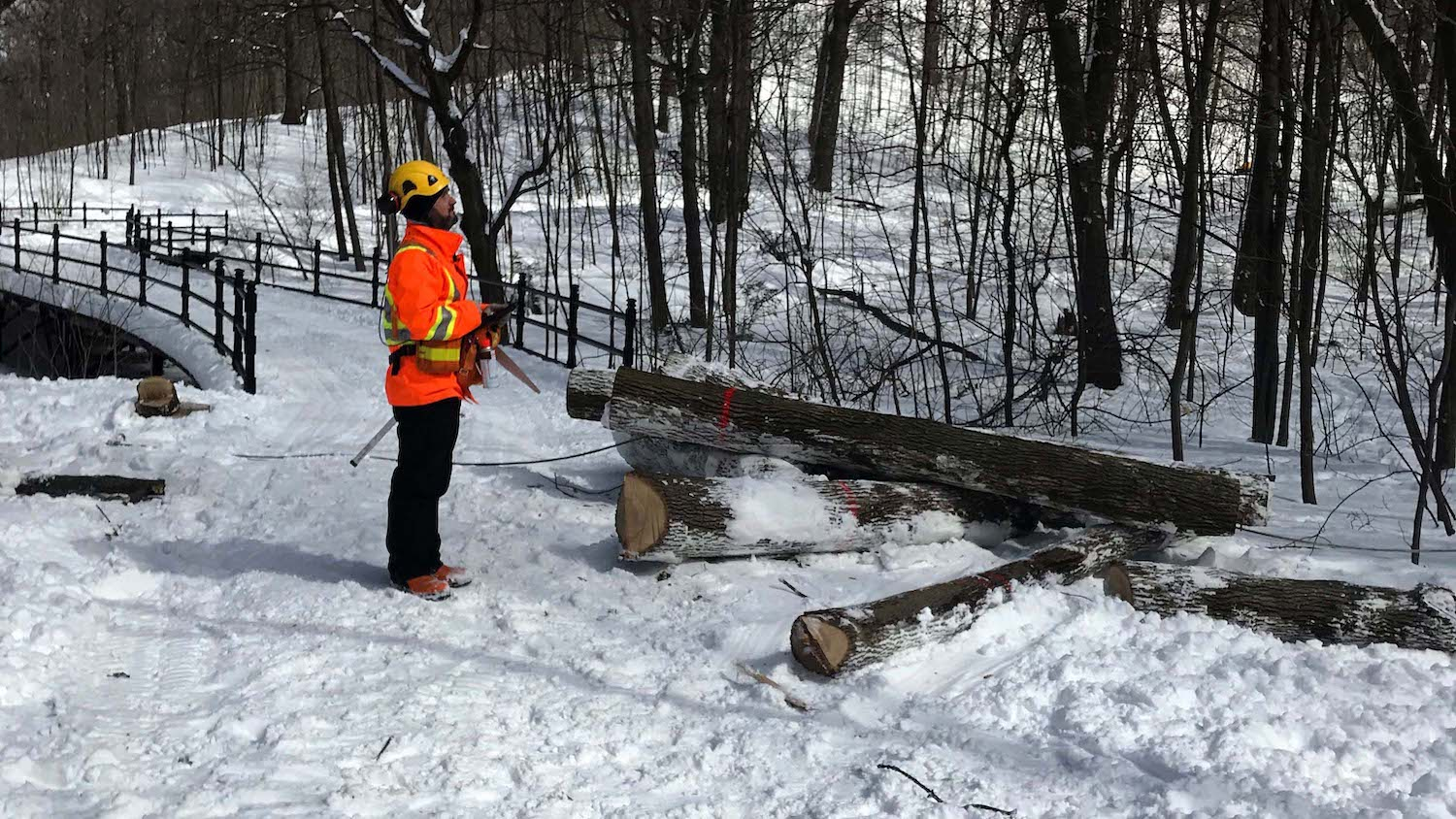Daniel Pilote tracks the health of ash trees in Montreal using an Arrow 100 GNSS receiver with ArcGIS Collector on iPad to track the spread of an invasive species