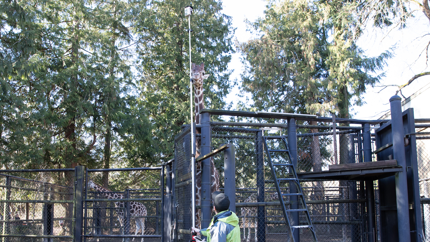 Dann Block maps a Seattle zoo's assets in a giraffe enclosure by using an Arrow 100 GNSS receiver mounted to a range pole