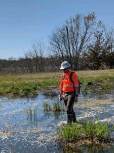 ESI walks through a field while mapping wetland delineations features with Arrow GNSS receivers, iOS, and the Ecobot app