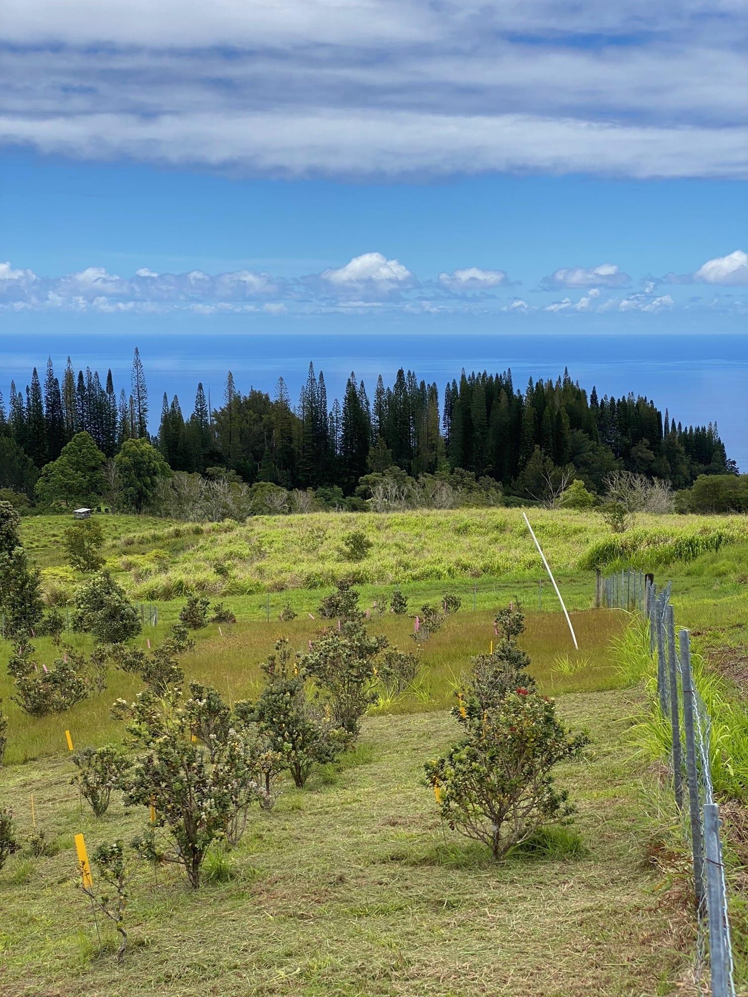 Brian Tucker Kupuaʻe ʻŌhiʻa Common Garden